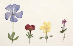 押し花 作り方 アート
