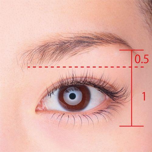 目と眉の黄金比